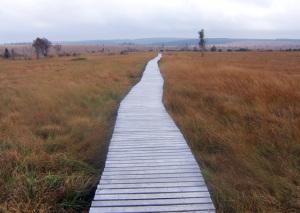 Wanderweg im Hohen Venn