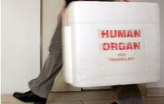 Belgien ist Spitzenreiter bei Organspenden: Europameister der Herzen