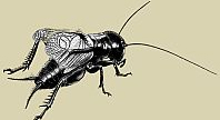 Insekten schmecken immer lecker_02