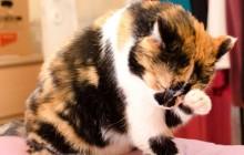 Dringend liebevolles Zuhause für Katze gesucht