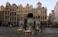 Katzen tollen in Brüssel
