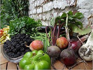 Obst und Gemüse: Stadtgärten in Brüssel