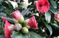 Frühlingserwachen im Park Tenbosch