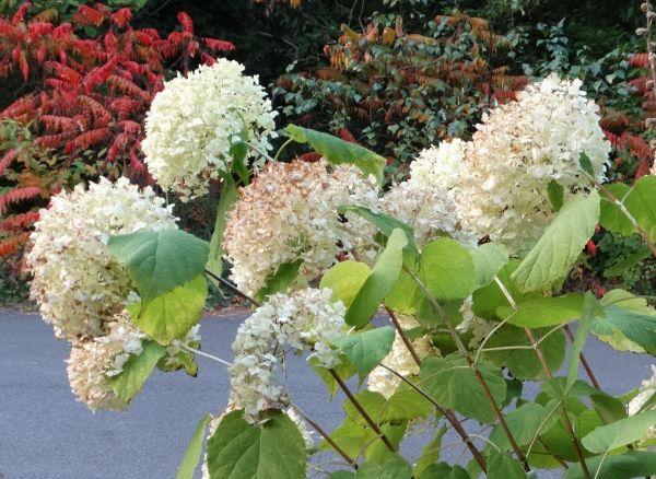 Unordnung erwünscht: Winterbeginn im natürlichen Garten