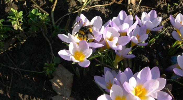 Der Garten im Februar
