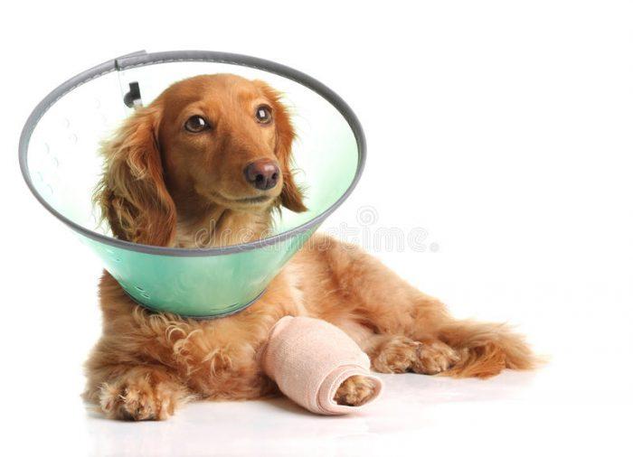 Krankenversicherung für unsere Haustiere