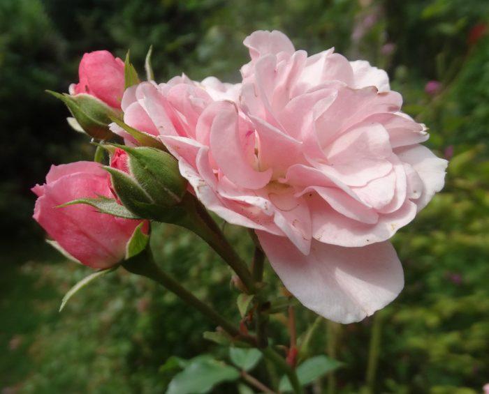 September: Der Garten erholt sich langsam