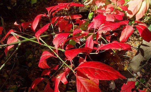 Farbenwunder im herbstlichen Garten
