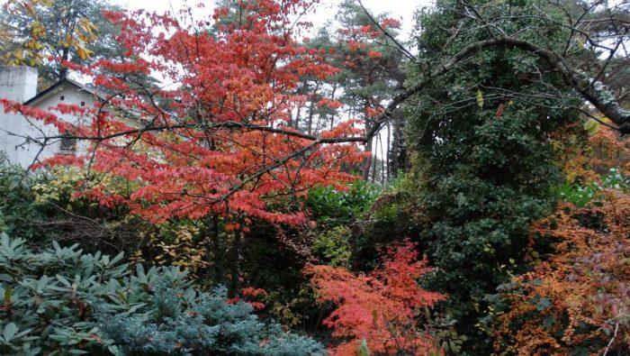 Der Garten im November