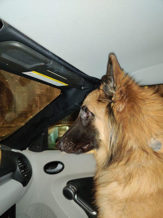 Ein belgisches Hundeleben