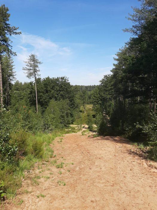 Staycation – Wanderungen durch die Mark Brabant (1)