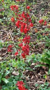 2 1 Rote Blüten